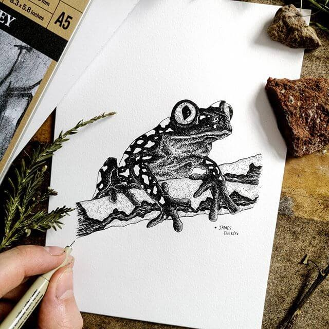 02-Frog-Everly-Drawings-www-designstack-co