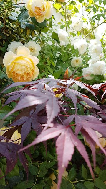 https://clementina-wwwdolcezzeinfinite.blogspot.com/2019/03/welcome-to-my-garden.html