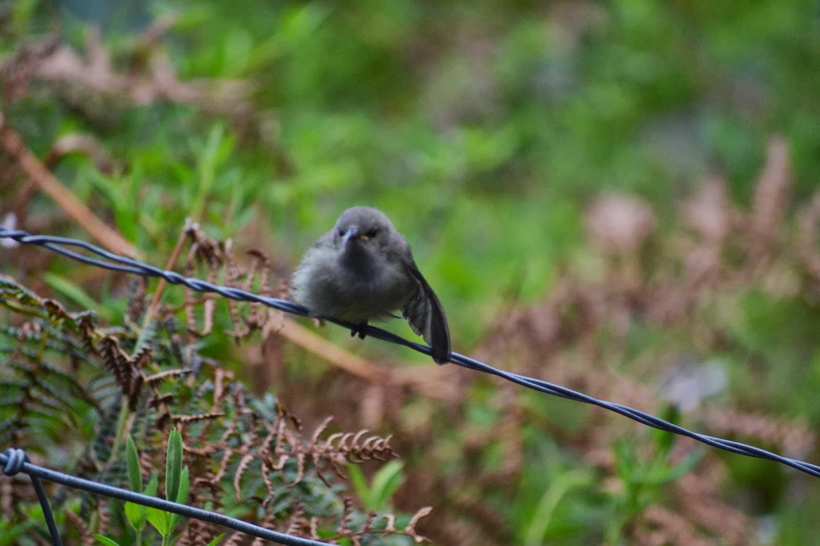 Baby bird on wire fence