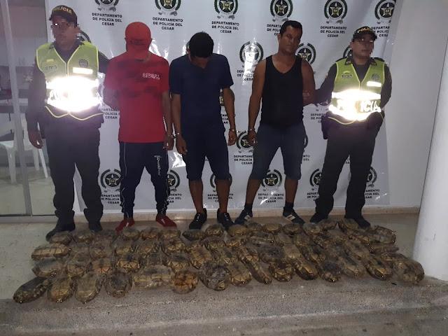 En libertad tres que llevaban 60 tortugas - hicoteas para venderlas