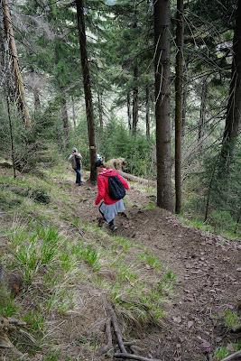 Strome zejście z Waligóry do Przełęczy Trzech Dolin