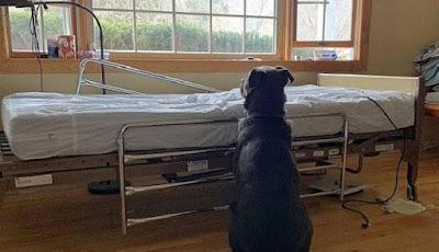 anjing setia menunggu majikannya yang meninggall dunia