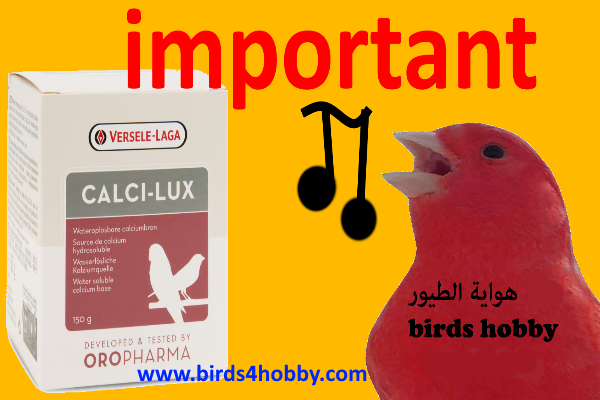 How to offers  Calci-Lux for birds and when to use