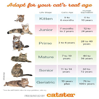 Furthermore, the knowledge about the cat teeth chart can eliminate some problems that commonly treat them.  The problem may appear namely, canine cat teeth too long, the cat lost a canine tooth, cat tooth sticking out of the mouth, cat double canine teeth, and cat canine tooth longer than other. Those problems that may emerge in the cattery. Therefore, the writer will define commonly, how many cat teeth, and how long their canine teeth. That explanation will serve narratively based on the age of each cat.