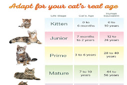 Cat teeth chart for the cattery