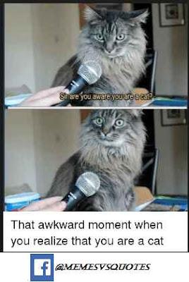 Awkward meme