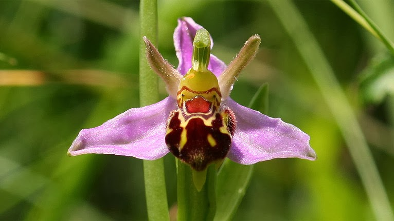 The Bee Orchids on growing orchids from seed