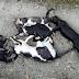 Νέα φρίκη στην Ξάνθη - Έριξαν φόλες και σκότωσαν γατάκια