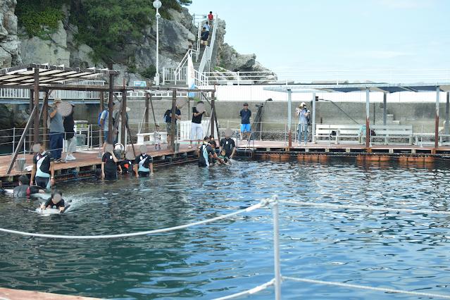 イルカと泳ごうプログラム