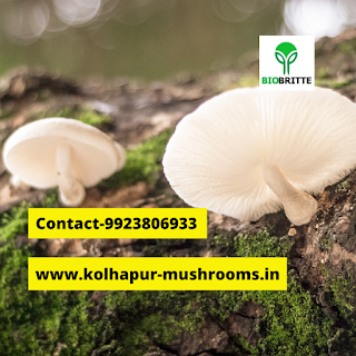 Oyster mushroom benefits and side effects