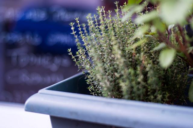 Blumen Fotografie Saarland