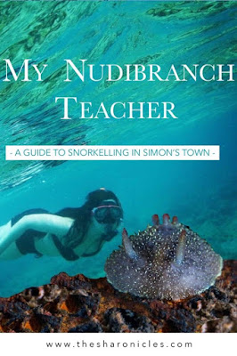Pin: My Nudibranch Teacher: A guide to snorkelling in Simon's Town