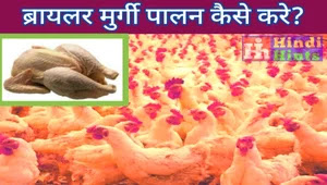 How-to-do-Broiler-Poultry-farming-in-Hindi