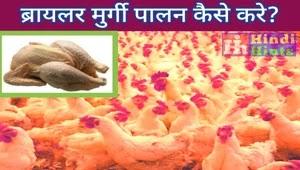 ब्रायलर मुर्गी पालन कैसे करे? - How to do Broiler Poultry farming? in Hindi