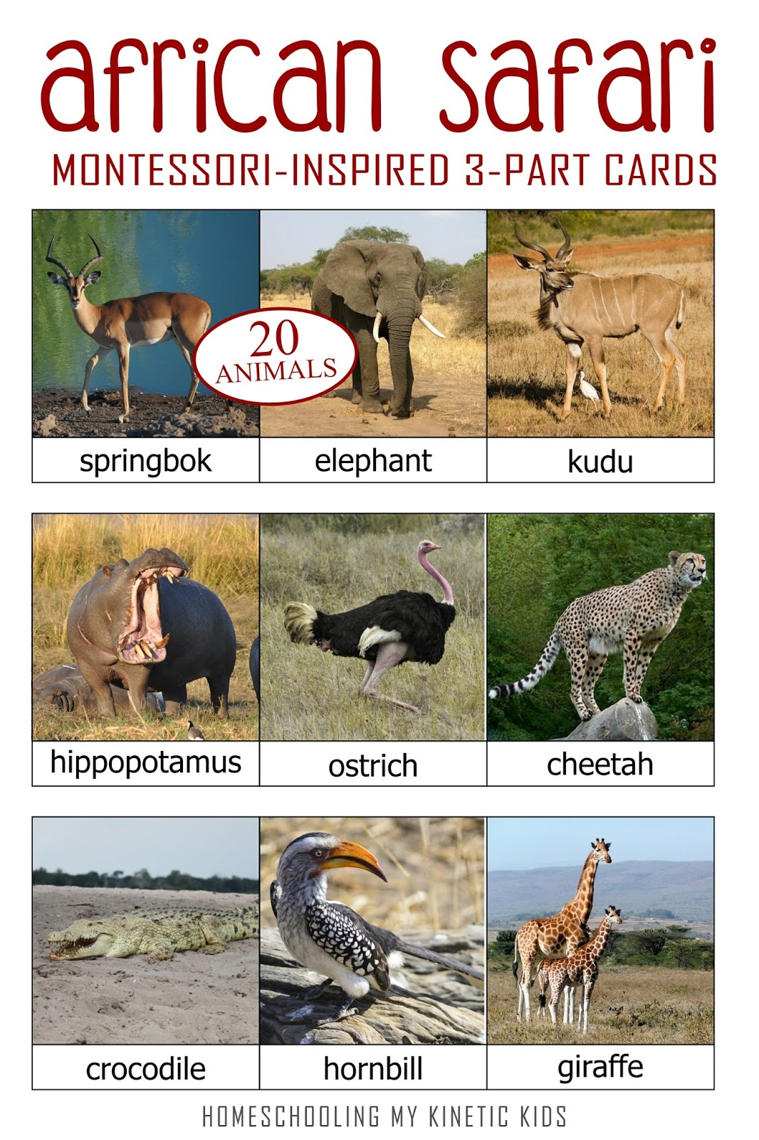 Who Am I African Safari Matching Game And 3 Part Cards
