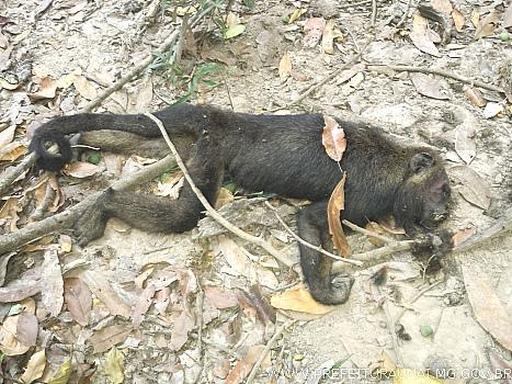 Macacos com suspeita de Febre amarela são encontrados mortos na Divisa com Santa Luzia