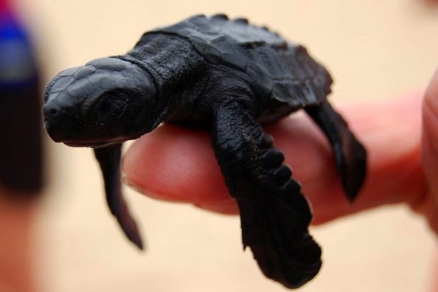 tinny animals on fingers4