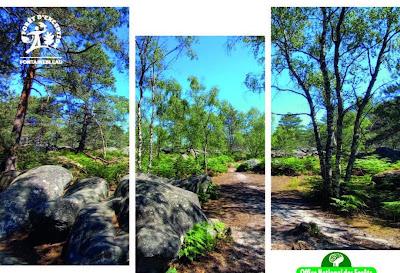 [COM ONF] Les estivales de la forêt c'est du 7 au 8 juillet 2021