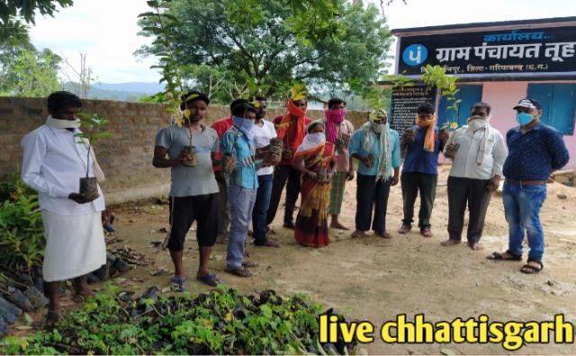cg badi yojana,narwa garwa ghurwa badi scheme,बाड़ी योजना,badi yojna,