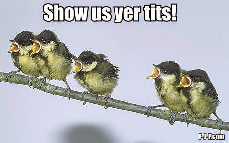 Funny Show Us Yer Tits! Bird Meme Picture
