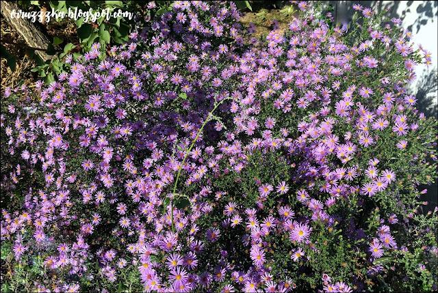 Cottage Douce & Bain Lait Violet Review | Гель для душа с ароматом метеоритов