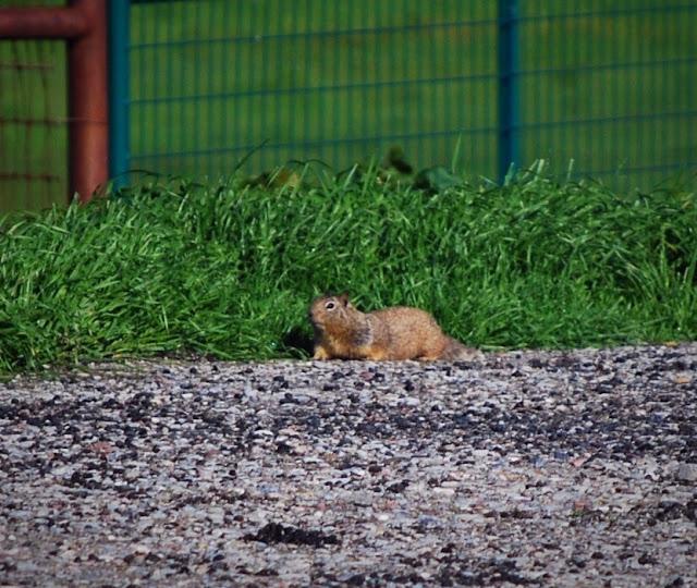 Burrow Blocker Ground Squirrel & Prairie Dog Control