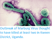 https://sciencythoughts.blogspot.com/2017/10/outbreak-of-marburg-virus-thought-to.html