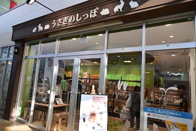 海老名のうさぎのしっぽ・海老名ビナウォーク店のハッスルジムでうさちゃんの新しい魅力に触れよう!