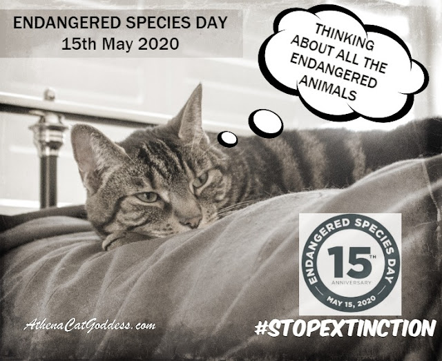 Endangered Species Day graphic