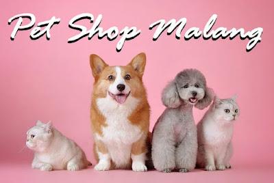 Pet shop Malang murah lengkap
