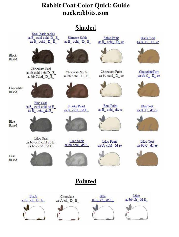 Mengenal tentang warna & gen warna Kelinci hias 3 lengkap