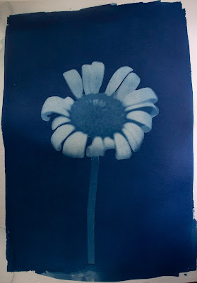 A cyanotype image of a daisy and a blurb about tornados.