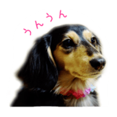 hinaxxsoyo sticker