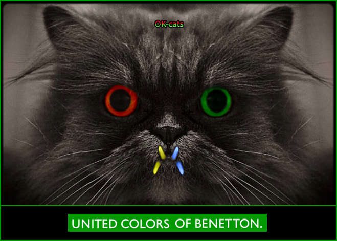 Photoshopped Cat picture • United Colors of Benetton cat colorful and derpy black cat