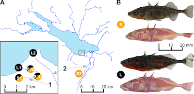 Watching new species evolve in real time