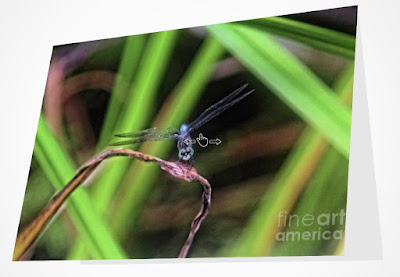 This image is from Fine Art America @ https://fineartamerica.com/featured/dragonfly-in-central-park-34-patricia-youngquist.html?fbclid=IwAR0-go4Vs1hWolWXvOZ2Hd8A010xHOSi8Kg9EgsESXoGMd4ZXBJGQ_8DG8w