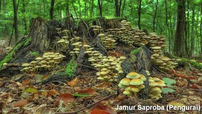 Klasifikasi Jamur Berdasarkan Cara Hidup Dan Habitat Jamur