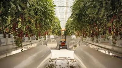 شركة بيور هارفست سمارت فارمز Pure Harvest Smart Farms