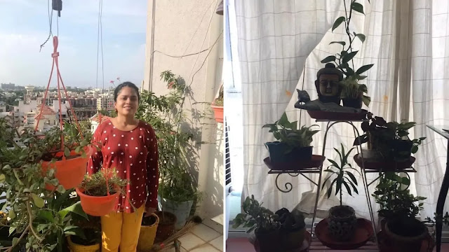 STRUCTURAL ENGINEER FROM AHMEDABAD CREATED GREEN SPACE IN HER PENT HOUSE!
