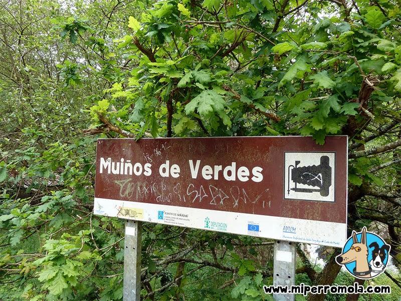 Senderismo con perros Refugio de Verdes, Can de Palleiro