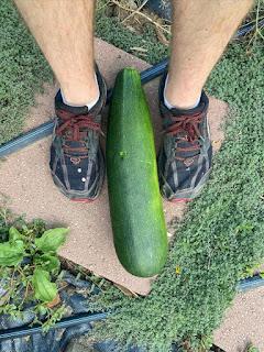Giant Zucchini & Feet