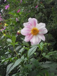 Dk Celluler Rikillagaskada Deliya Flowers