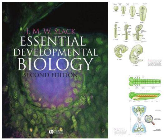 Essential Developmental Biology , pdf  , google