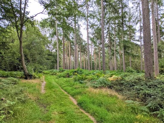 Knebworth footpath 38 heading east through Graffidge Wood