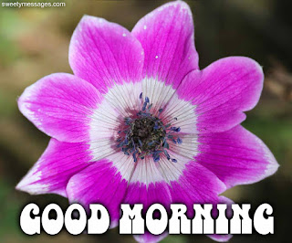 good morning image with pink flower