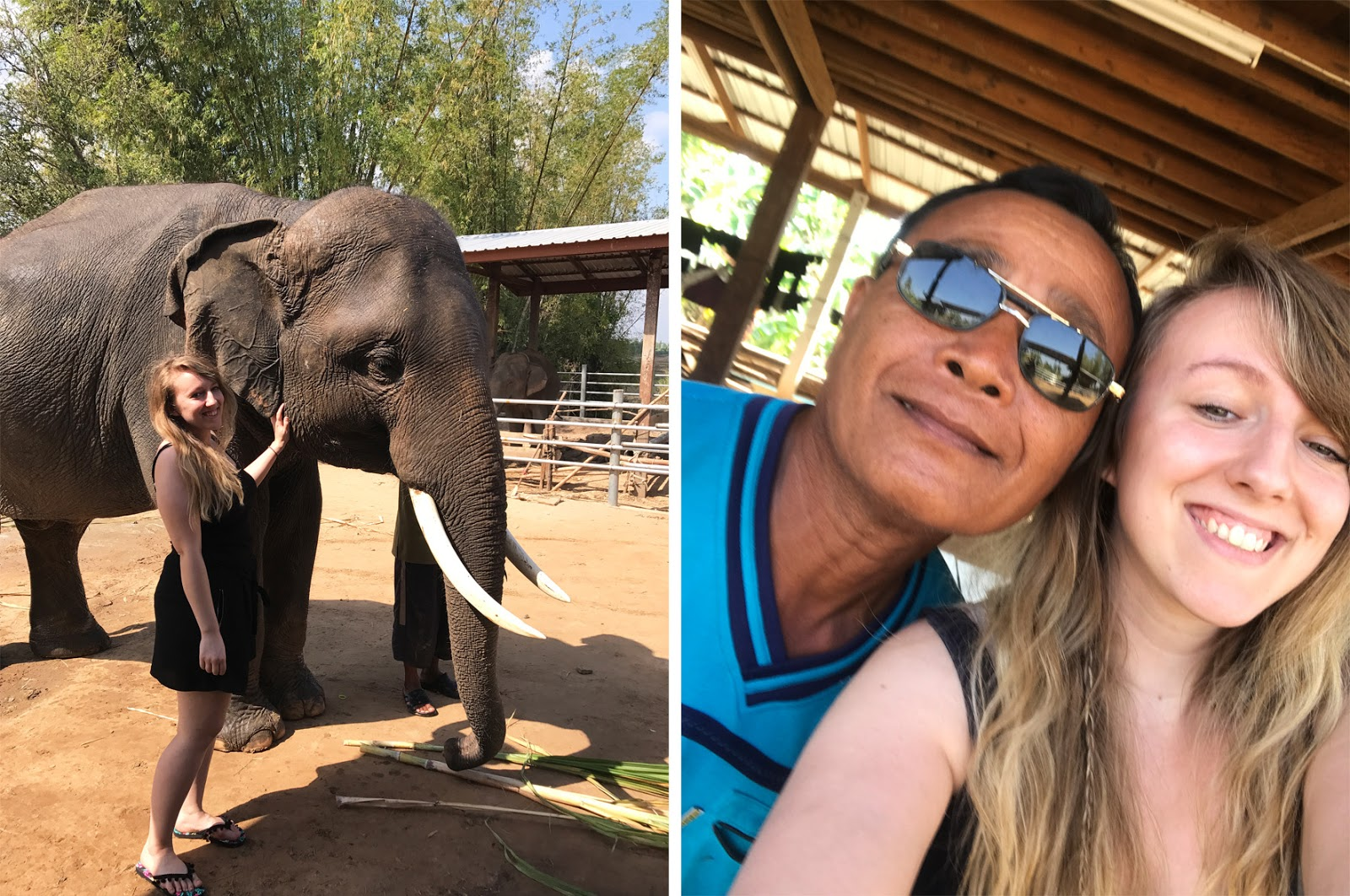 Surin Homestay Elephants in Thailand
