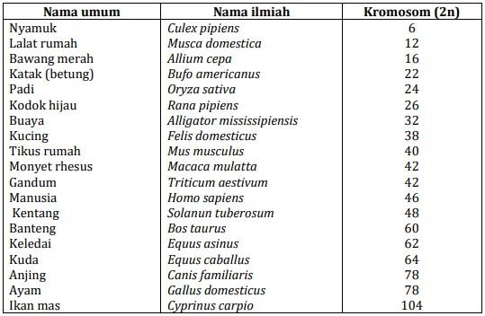 Jumlah Kromosom Beberapa Makhluk Hidup