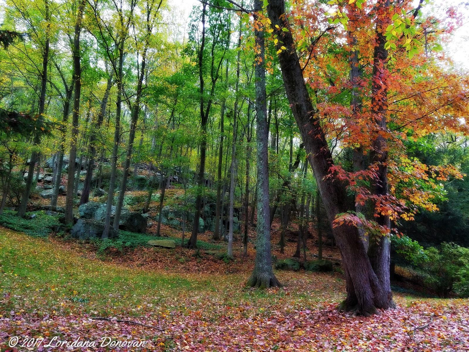 Blogging Away: Foliage Peak