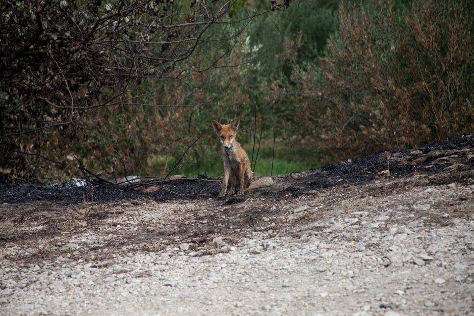 Moja lisica 2 mjesto za upoznavanje