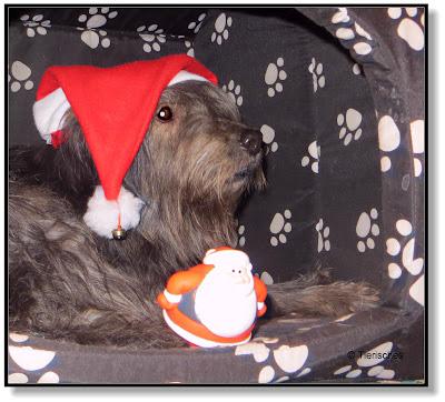 Lotte mit der Weihnachtsmannmütze